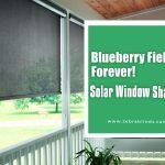 Blueberry Fields Forever! – Solar Window Shades