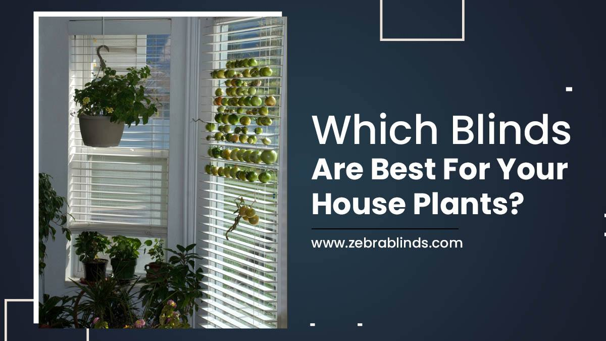 Which Blinds Are Best For Your House Plants?