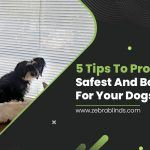 5 Tips to Provide the Safest and Best Home for Your Dogs