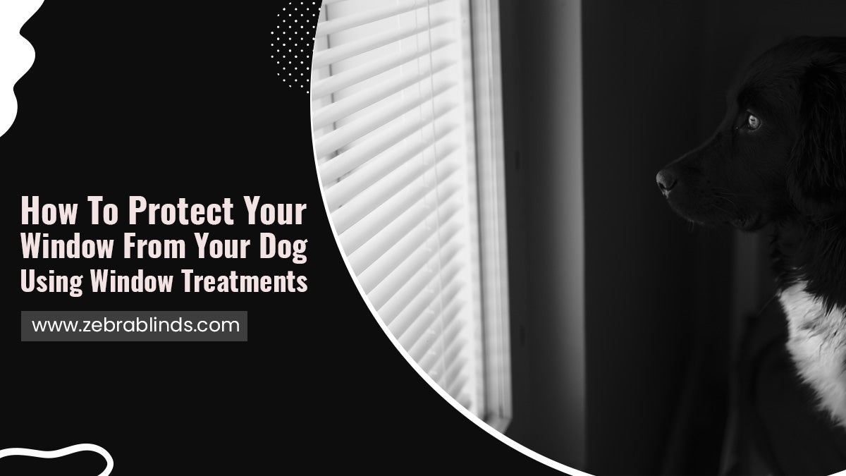 How-To-Protect-Your-Window-From-Your-Dog-Using-Window-Treatments